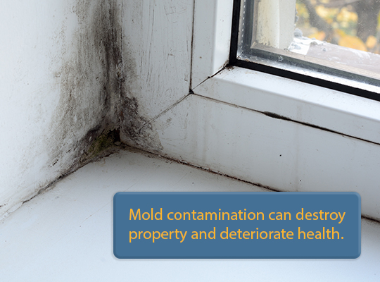 Mold contamination is one of the 5 most common issues found during a home inspection.