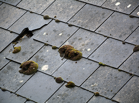 How Does Mold Get On My Roof Homemd Specialists In Mold
